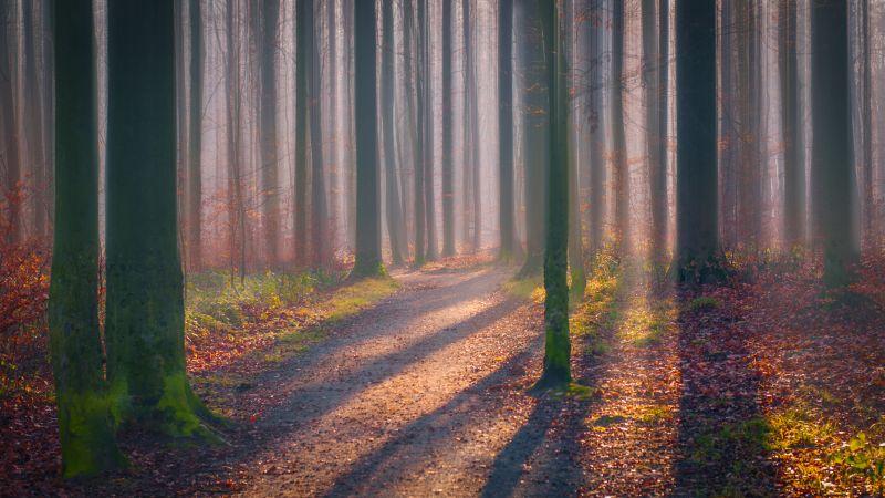Autumn Forest, Fallen Leaves, Fog, Sun light, Shadow, Trees, Woods, 5K, Wallpaper