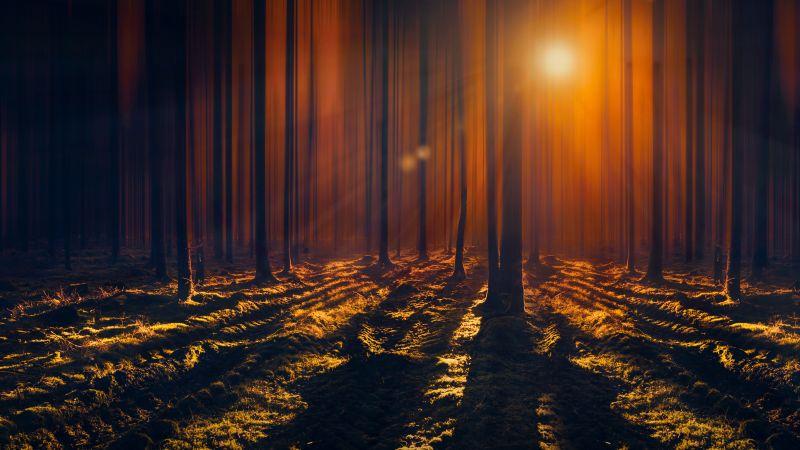 Sun rays, Woods, Tall Trees, Shadow, Dark Forest, Sunbeam, Orange, 5K, Wallpaper