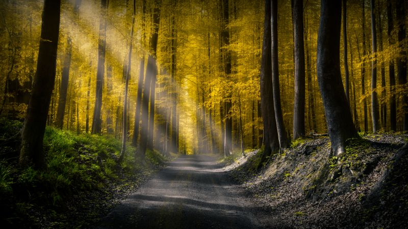 Sun rays, Dirt road, Autumn Forest, Foliage, Pathway, Woods, Trees, Calm, Peaceful, 5K, Wallpaper