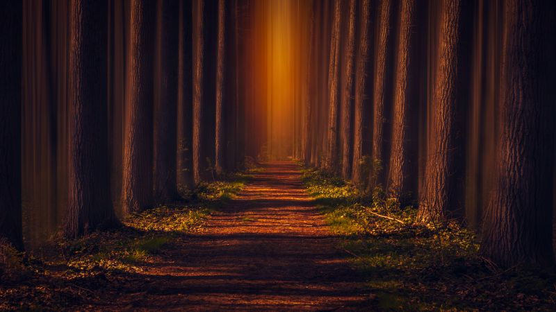 Pathway, Autumn Forest, Leaves, Trees, Woods, Road, Sunlight, Wallpaper
