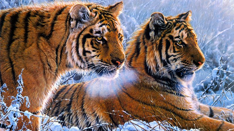 Tigers, Pair, Frozen, Winter, Snow, Big cats, Paint, Wallpaper