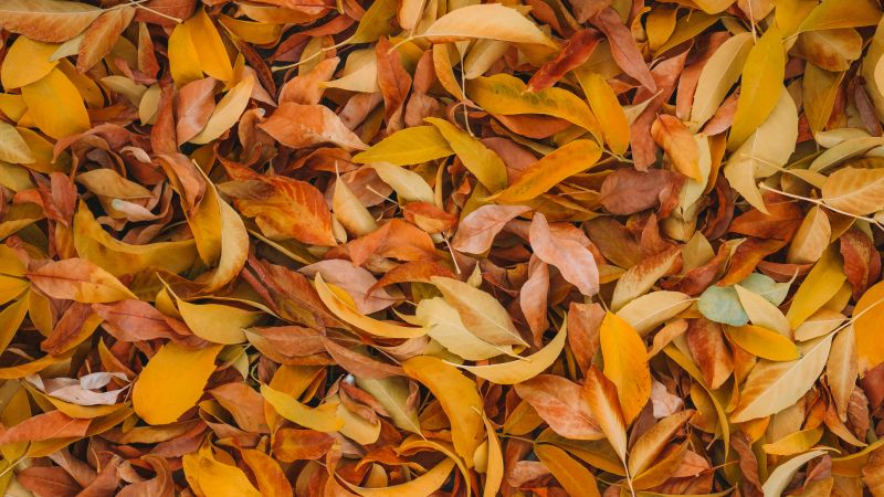 Leaves, Fall Foliage, Brown, Yellow background, 5K, Wallpaper