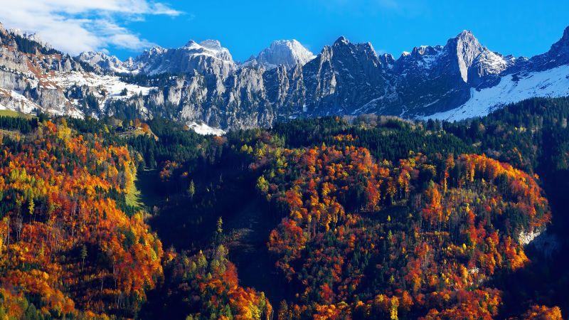 Autumn trees, Snow mountains, Blue Sky, Glacier, Landscape, Mountain range, Scenery, 5K, Wallpaper
