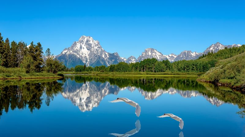 Lake, Mountains, Blue Sky, Landscape, Clear sky, Reflection, Water, Swans, Snow covered, Trees, Scenic, Beautiful, Wallpaper