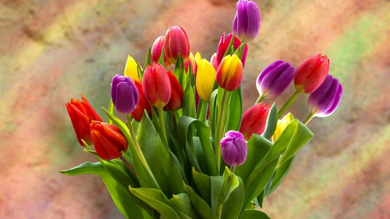 Tulip Bouquet, Spring flowers, Tulips, Blossom, Bloom, Bright, Green leaves, Red, Yellow, Violet, Wallpaper