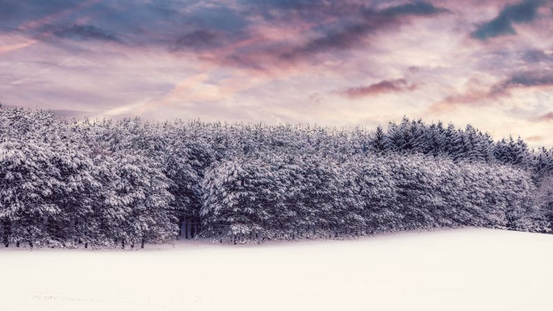 Snow covered, Trees, Winter snow, Landscape, Clouds, Scenery, White, Forest, 5K, 8K, Wallpaper