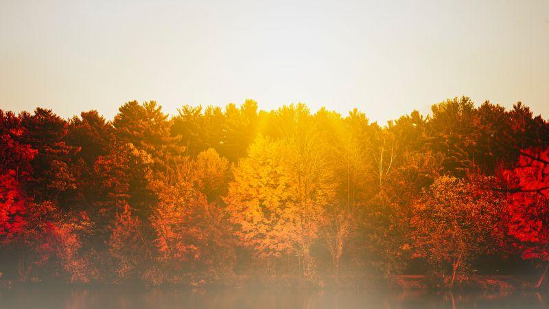 Autumn trees, Body of Water, Sunflare, Sunrise, Reflection, Lake, Morning, Fog, 5K, 8K, Wallpaper