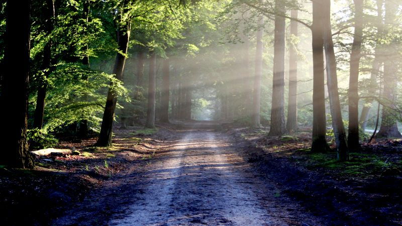 Forest, Path, Trees, Outdoor, Woods, Sunlight, Wallpaper