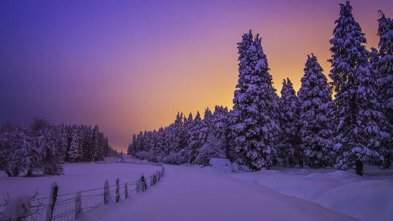 Landscape, Purple sky, Snow covered, Evening sky, Sunset, Winter, Trees, Scenery, Beautiful, 5K, Wallpaper