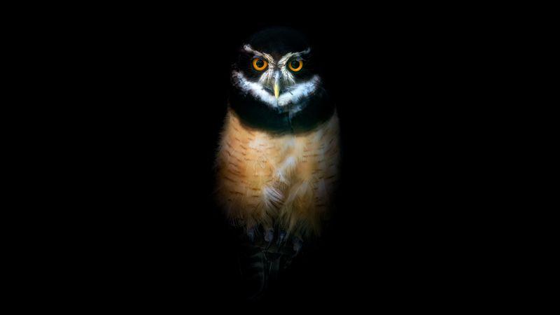 Owl, Night, Wildlife, Black background, 5K, 8K, Wallpaper