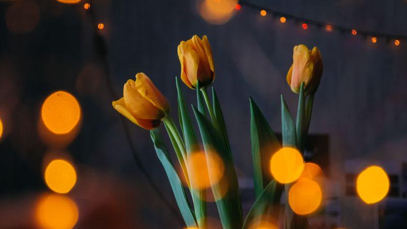 Yellow tulips, Bokeh, Lights, Decoration, Blossom, Green leaves, 5K, Wallpaper