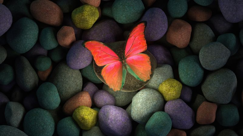 Butterfly, Stones, Colorful, Focus, Pebbles, Aesthetic, Glowing, Girly backgrounds, Wallpaper