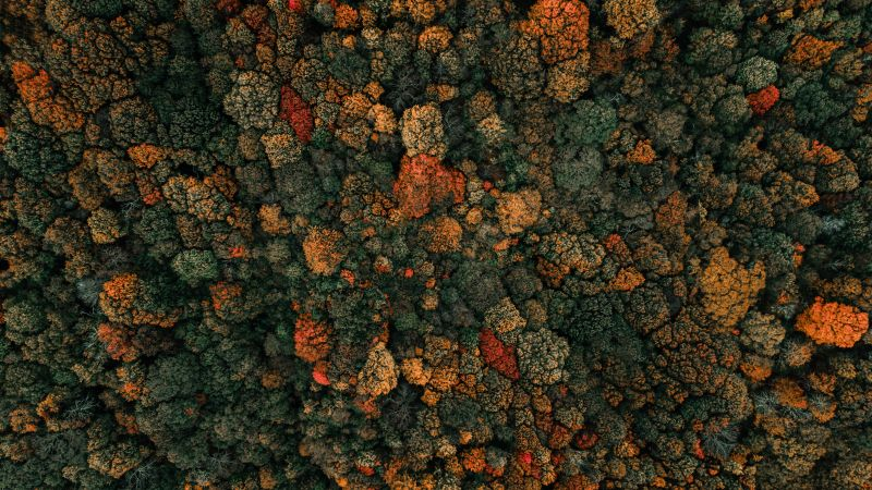 Autumn trees, Forest, Aerial view, Birds eye view, Green Trees, 5K, Wallpaper