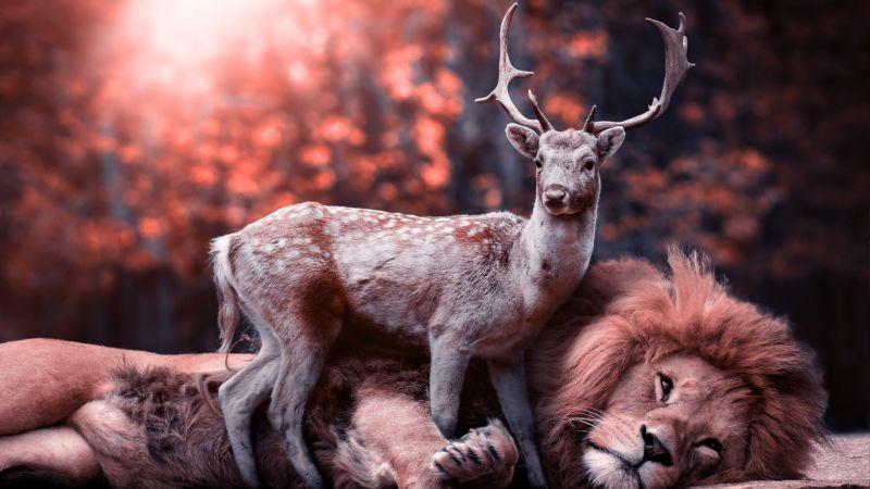 Lion, Deer, Hirsch, Predator, Wild animals, Mammal, Big cat, Carnivore, Fantasy, Cute, 5K, Wallpaper