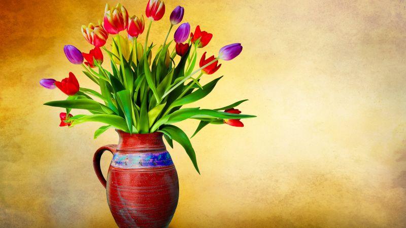 Flower vase, Tulip flowers, Multicolor, Colorful, Green leaves, Bouquet, Decoration, Wallpaper