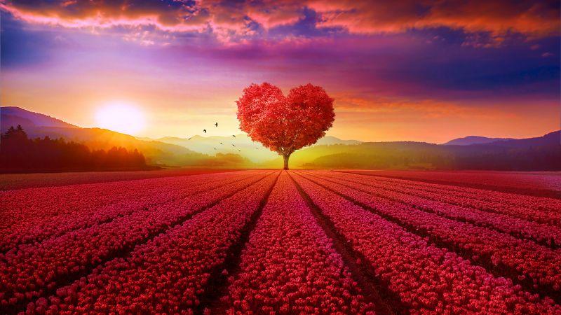 Heart tree, Flower garden, Red flowers, Landscape, Scenery, Beautiful, Birds, Sunrise, Clouds, Mountains, Aesthetic, Wallpaper