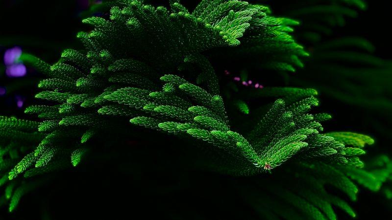 Green plant, Closeup, Dark background, Selective Focus, Fresh, Beautiful, Wallpaper