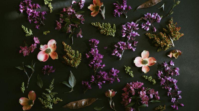 Purple Flowers, Dark background, Spring flowers, Green leaves, Foliage, 5K, Wallpaper