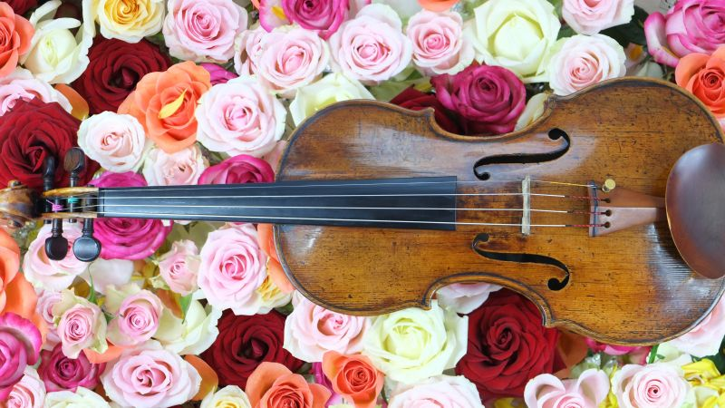 Rose flowers, Violin, Strings, Multi color, Colorful, Floral Background, Blossom, Beautiful, Musical instrument, 5K, Wallpaper