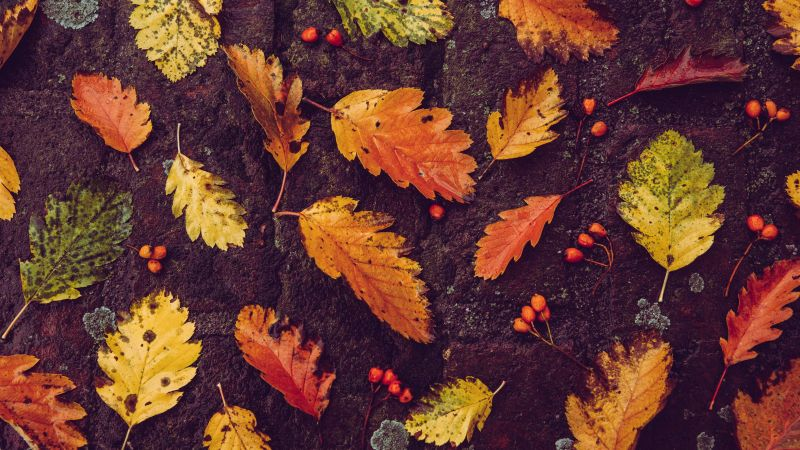 Autumn leaves, Foliage, On the ground, Fallen Leaves, Leaf Background, 5K, Wallpaper