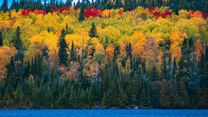 Forest, Autumn trees, Blue Sky, Lake, Colorful, Scenery, Beautiful, Landscape, Clouds, Greenery, 5K, Wallpaper