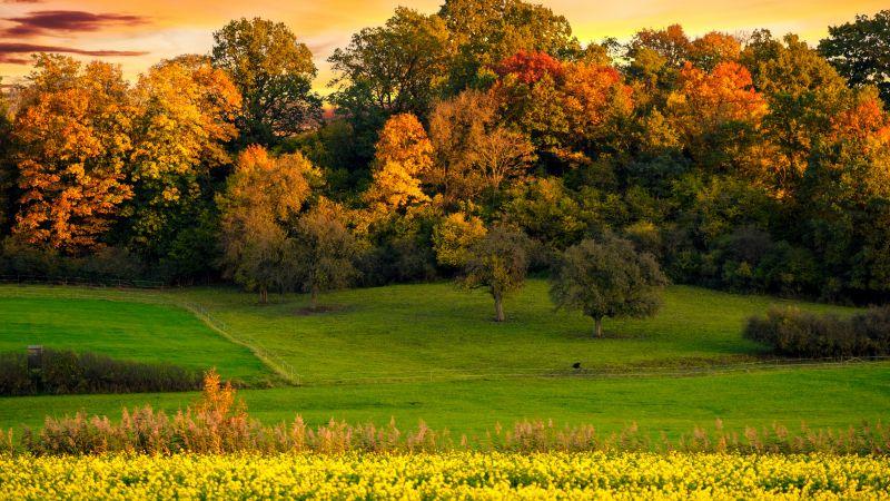 Autumn trees, Sunset, Landscape, Afterglow, Meadow, Grass field, Greenery, Beautiful, Scenery, Yellow flowers, Orange sky, 5K, Wallpaper