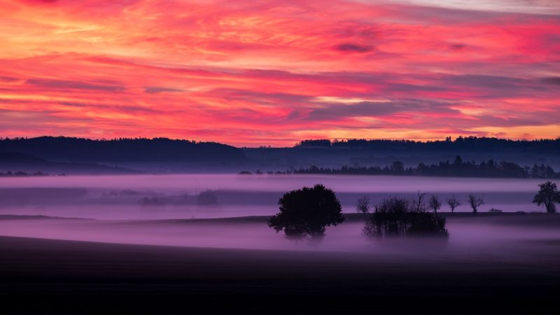 Orange sky, Sunset, Landscape, Foggy, Scenery, Clouds, Trees, Silhouette, Dawn, 5K, Wallpaper