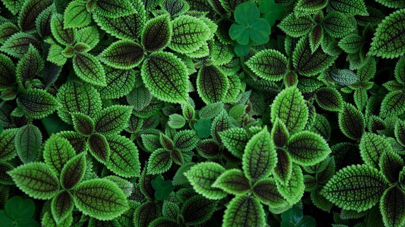 Green leaves, Plant, Aesthetic, 5K, Wallpaper