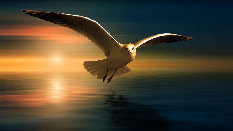 Seagull, White Birds, Sunset Orange, Reflection, Flying bird, Wings, Blur background, 5K, Wallpaper