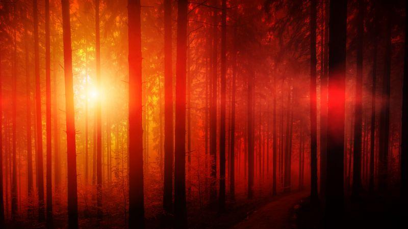 Dark Forest, Sun light, Woods, Sunset, Tall Trees, Landscape, Pathway, Scenic, Sunbeam, 5K, Wallpaper