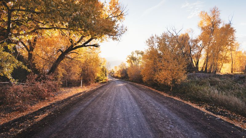 Dirt road, Autumn trees, Landscape, Countryside, Sunny day, Fallen Leaves, Wallpaper