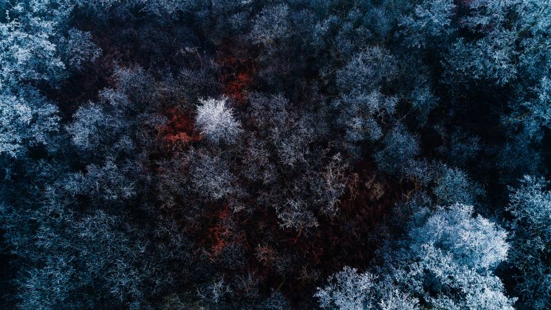 Winter forest, Snow covered, Aerial view, Birds eye view, Drone photo, Trees, Wallpaper