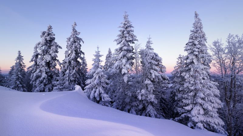 Winter, Snow, Pine trees, Evening, Cold, Switzerland, December, 5K, Wallpaper
