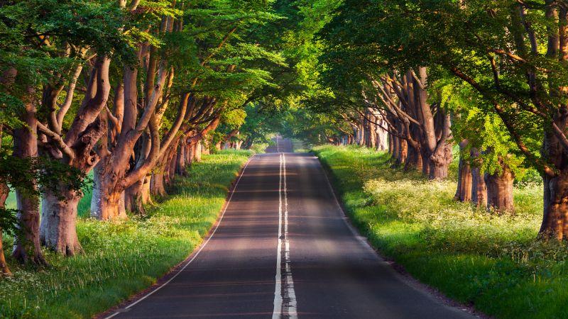 Blandford Road, Empty Road, Green Trees, Landscape, Woods, Greenery, Scenery, Wallpaper