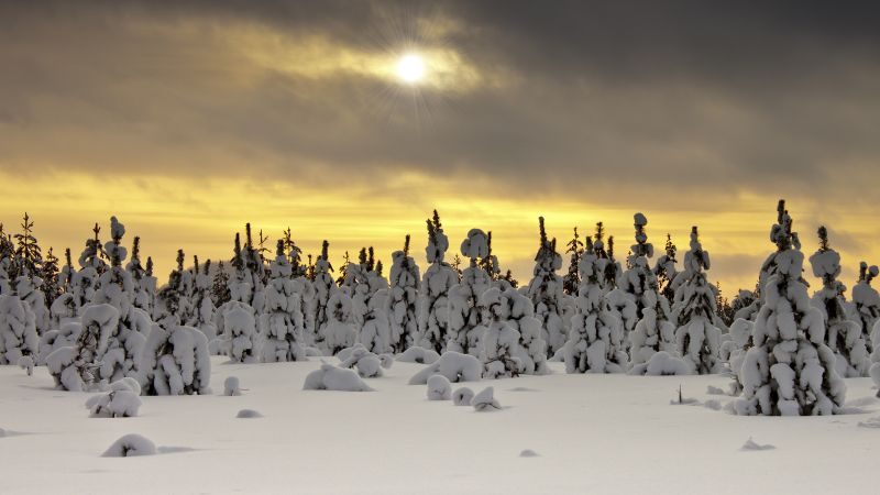 Snowy Trees, Landscape, Winter, Sunset, Snow covered, Sun rays, Cloudy Sky, Wallpaper