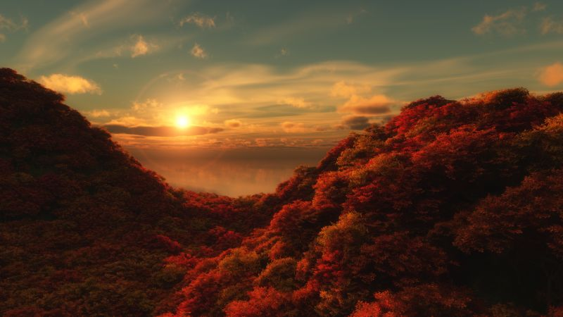 Red Trees, Sunrise, Cloudy Sky, Forest, Aerial view, Beautiful, 5K, Wallpaper