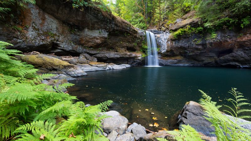Coquille River Falls, Oregon, Waterfalls, Forest, Landscape, Green Trees, Ferns, Body of Water, Water Stream, Long exposure, 5K, Wallpaper