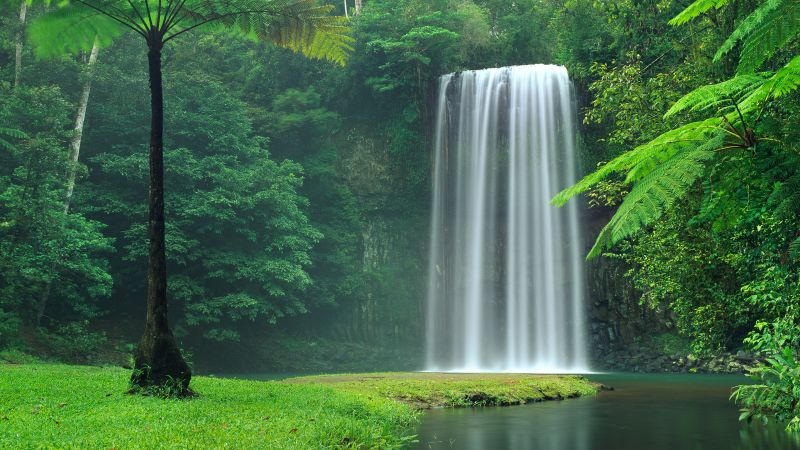 Millaa Millaa Falls, Australia, Waterfalls, Forest, Green Trees, Landscape, Cliff, Long exposure, Water Stream, Beautiful, Scenery, Wallpaper