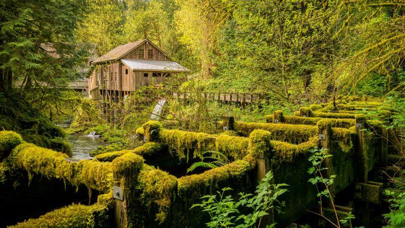 Cedar Creek Grist Mill, Woodland, Washington State, Forest, Landscape, Green Trees, Greenery, Moss, Scenery, 5K, Wallpaper