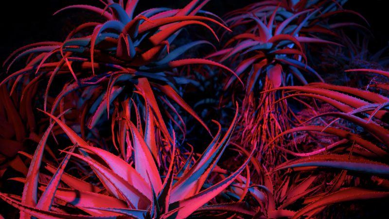 Aloe vera, Succulent, macOS Big Sur, Night, Plant, Stock, 5K, Wallpaper