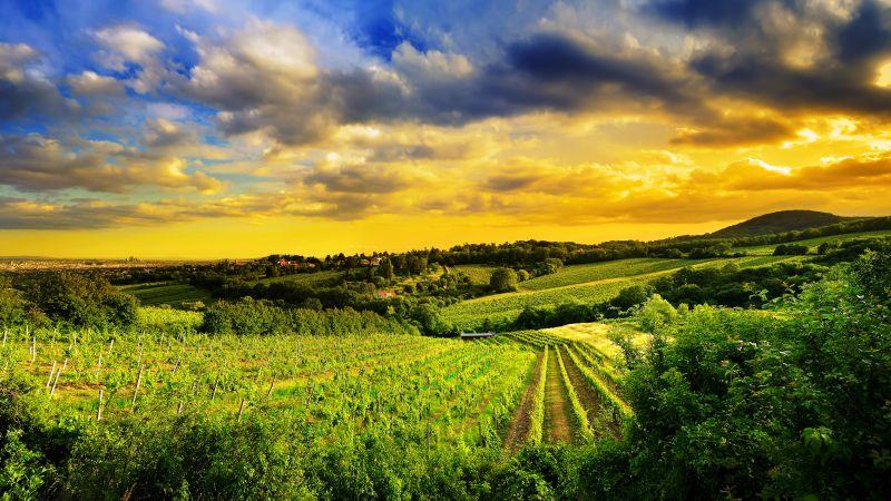 Kahlenberg hills, Vienna, Austria, Landscape, Greenery, Sunset, Beautiful, Cloudy Sky, Plantation, Fields, 5K, Wallpaper
