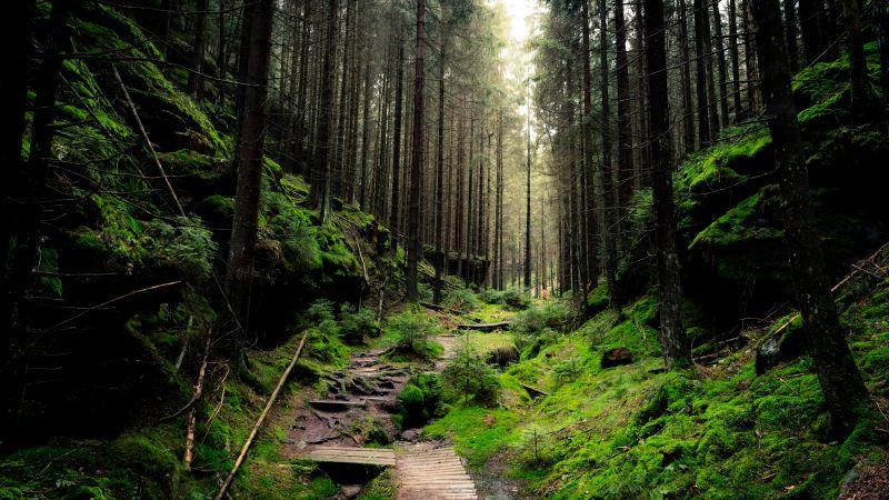 Saxon Switzerland National Park, Forest, Day light, Green, 5K, Wallpaper