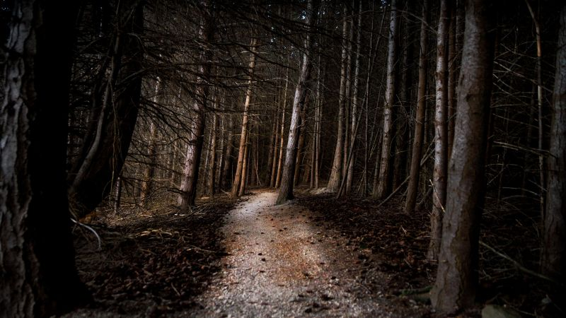 Thick forest, Woods, Pathway, Tall Trees, Landscape, 5K, Wallpaper