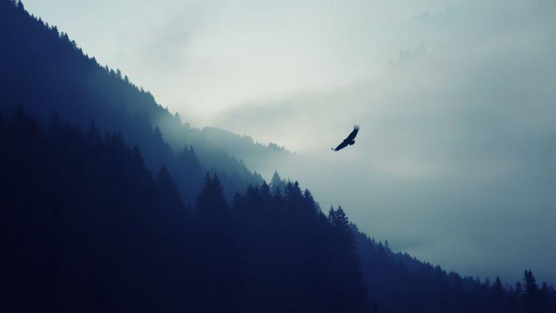 Eagle, Foggy, Mist, Mountain, Trees, Silhouette, Birds of Prey, Wallpaper