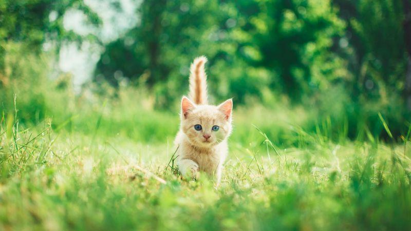 Kitten, Cute, Green Grass, Bokeh, Baby cat, Green background, Mammal, 5K, Wallpaper