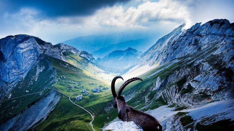 Mount Pilatus, Goat, Landscape, Valley, Clouds, Sunlight, Scenic, Wallpaper