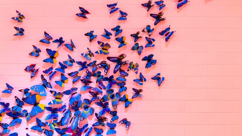 Blue butterfly, Pink background, Wall, Decoration, Colorful, Beautiful, Aesthetic, 5K, Wallpaper