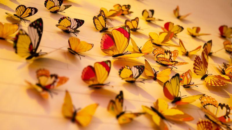 Colorful butterflies, Aesthetic, Wall Decorations, Yellow Butterflies, Closeup, Assorted, Beautiful, 5K, Wallpaper