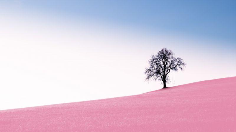 Solitude Tree, Clear sky, Landscape, Surreal, Pink Sand, Desert, Swing, Scenery, 5K, 8K, Wallpaper