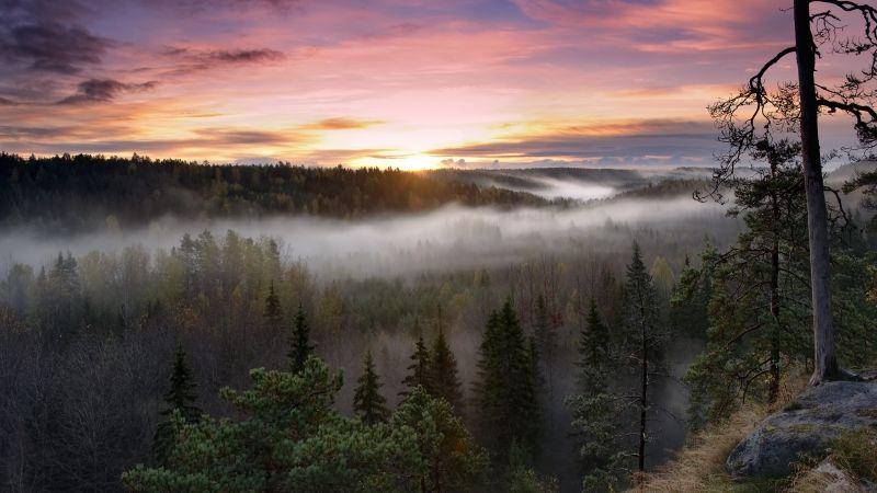 Noux National Park, Finland, Sunrise, Fog, Forest, Green Trees, Landscape, Early Morning, Wallpaper